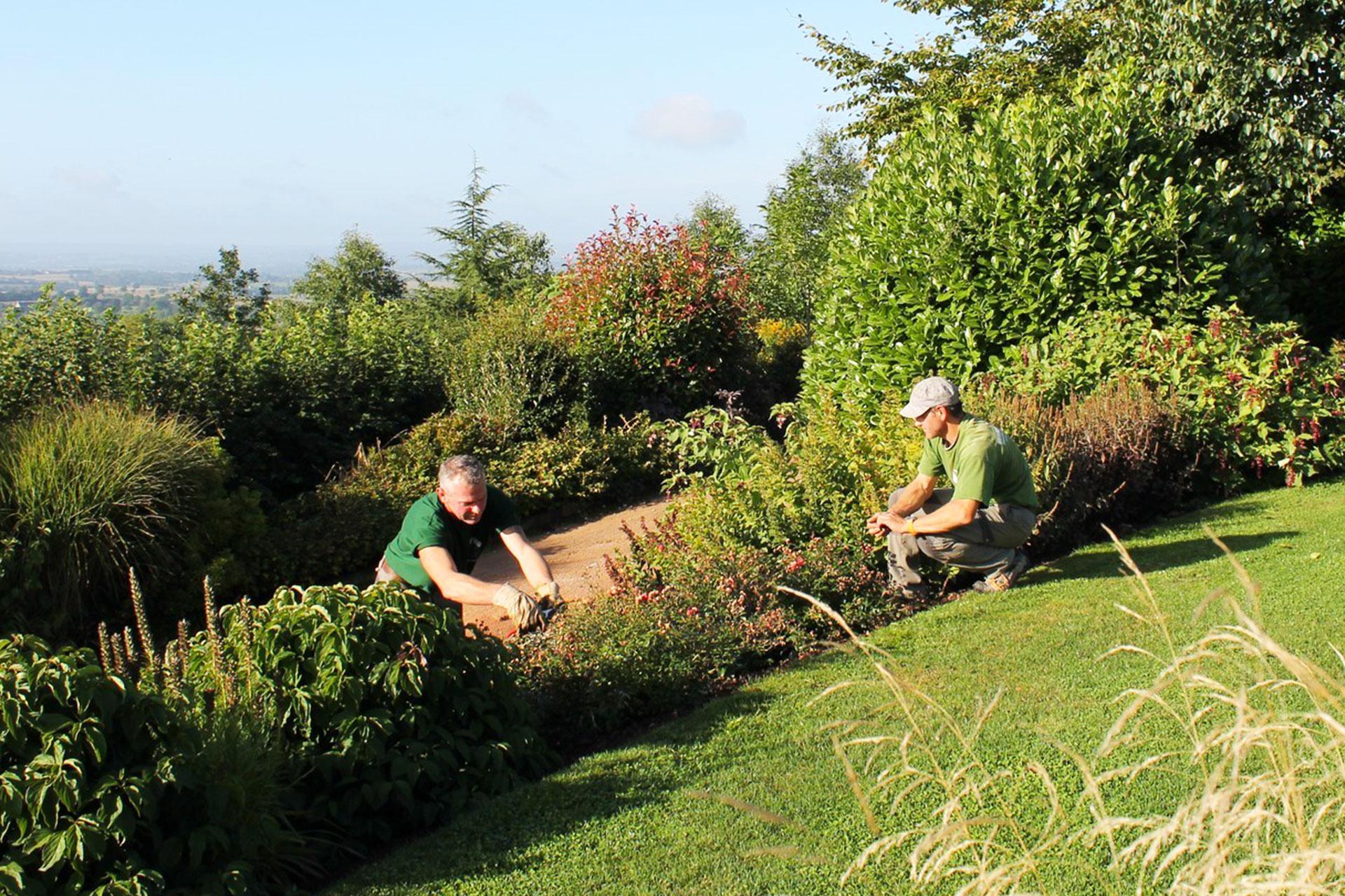 Entretien des arbustes et massifs