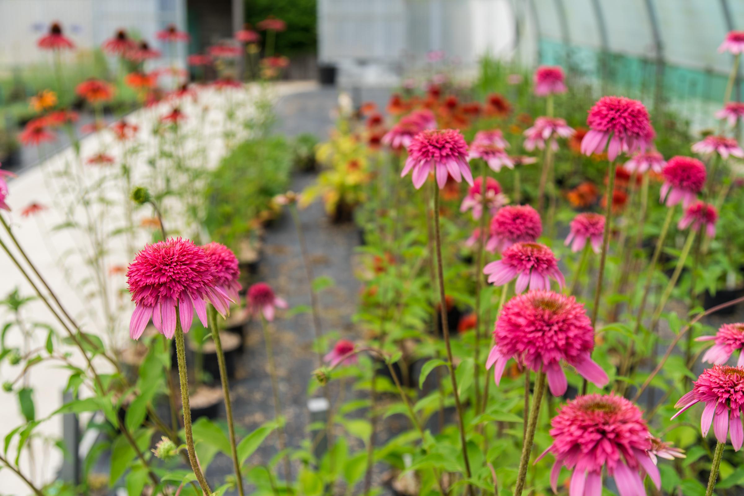 Plante pour le jardin